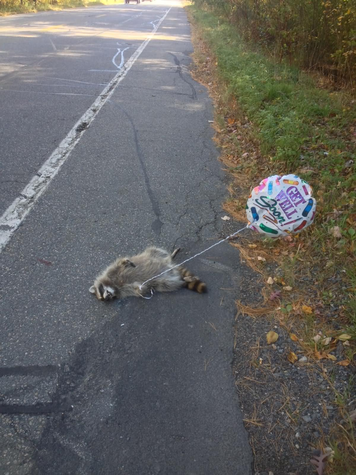 Funny Raccoon Road Kill Picture