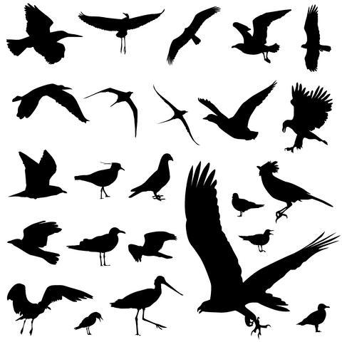 38 unique birds tattoos designs. Black Bedroom Furniture Sets. Home Design Ideas