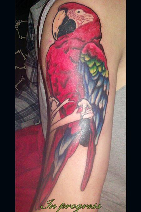90 Cool Parrot Tattoos