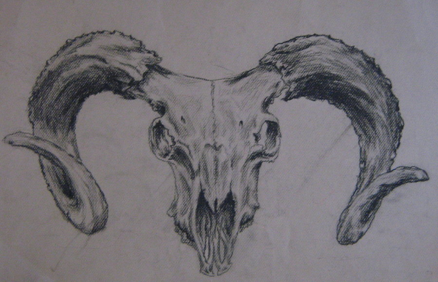 Cow skull tattoo flash - photo#2