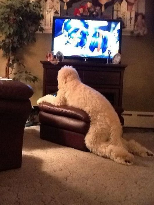 Dog Watching Tv Funny Wtf Image