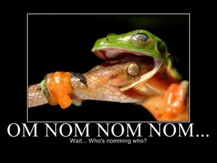 65 Most Funny Nom Nom Nom Pictures That Will Make You Laugh