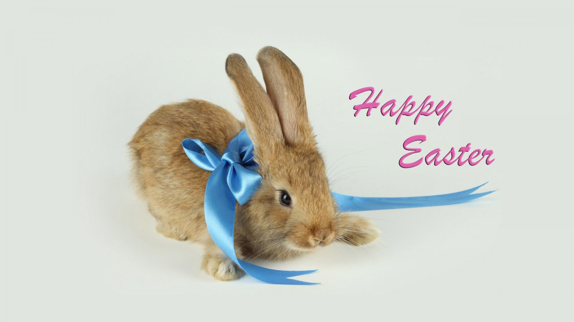 85 very beautiful easter greeting pictures and photos happy easter bunny with blue bow kristyandbryce Choice Image