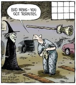 bad news you got termites funny witches image