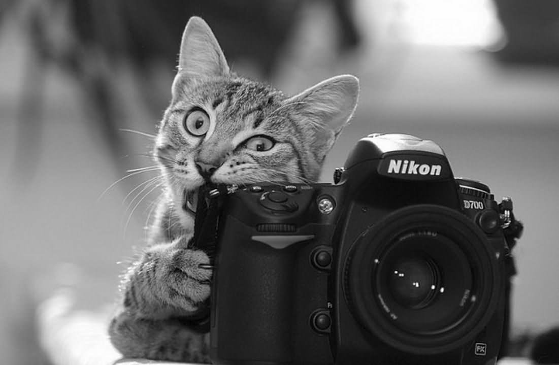 Cat Biting Camera Funny Black And White Picture