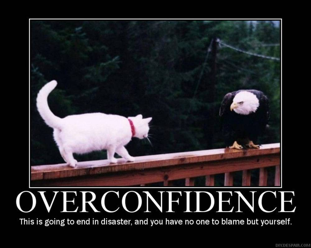 funny office poster. Office Posters Motivational Funny. Funny Overconfidence Cat And Bird Image P Poster