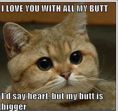 Cat Say I Love You With All My Butt Funny Picture 15 funny butt pictures ideas