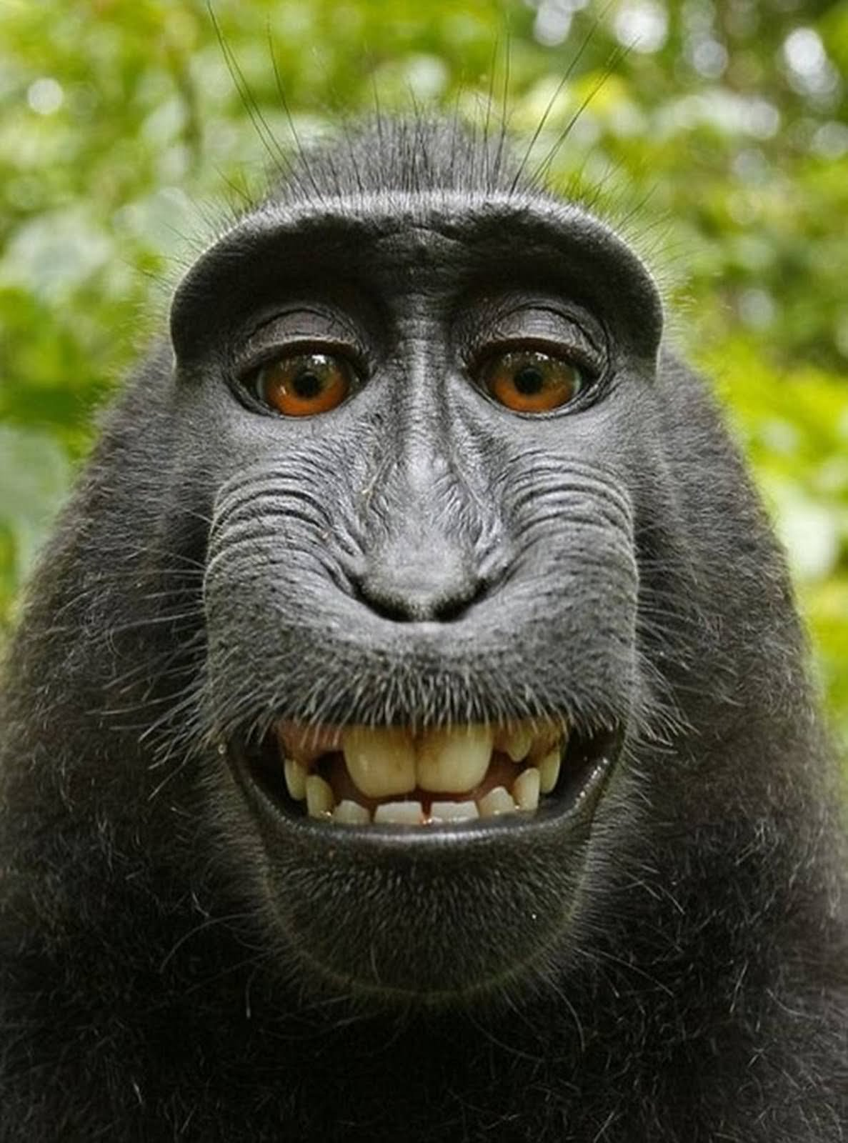 Animal Makes Funny Face