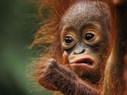 Funny Animal Faces - Askideas.com
