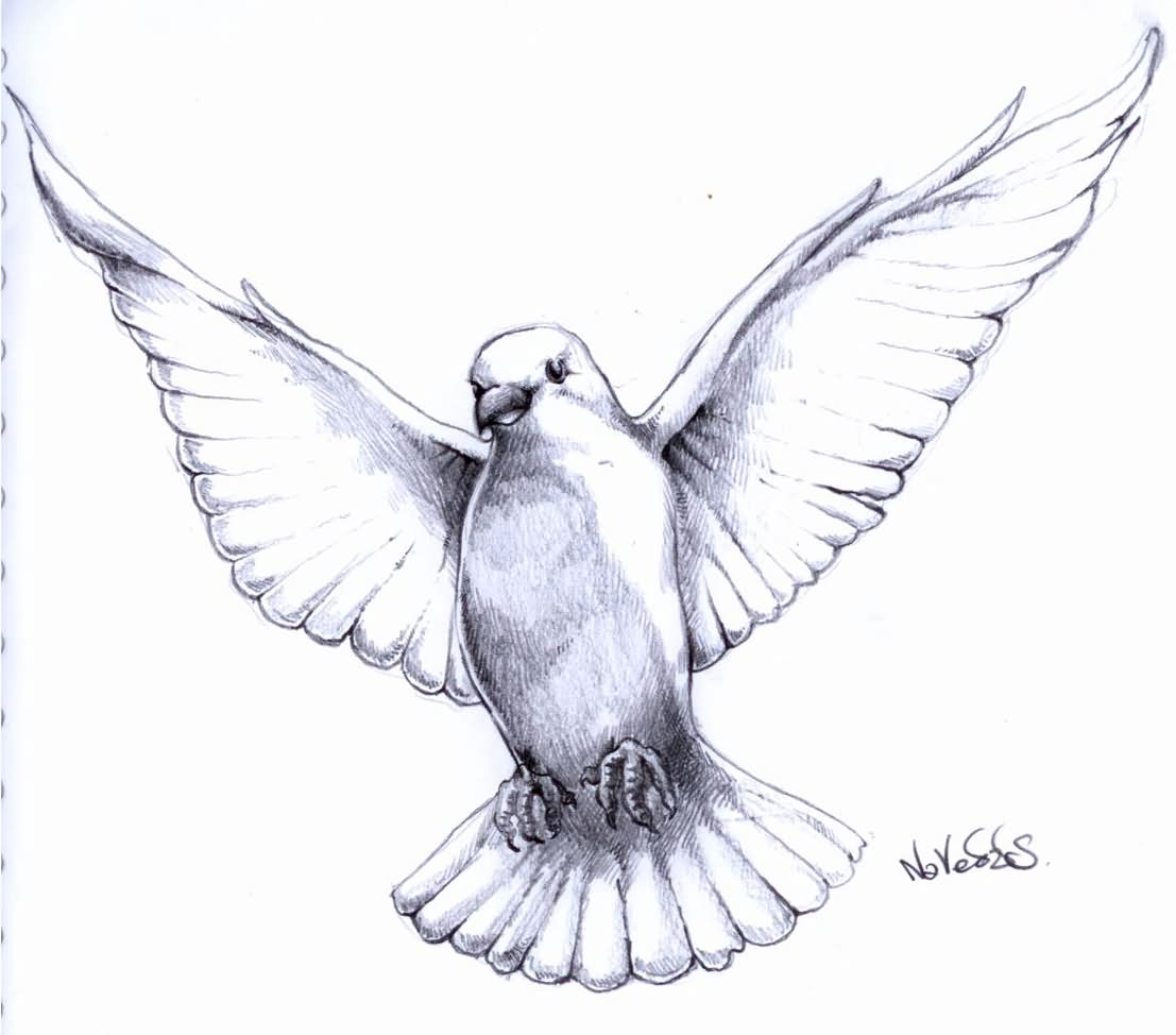 flying dove pencil drawing - photo #26