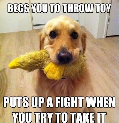 Funny Meme Eating : Dog eating toy funny animal meme image
