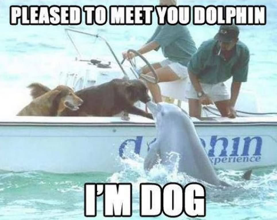 Dog Kissing Dolphin Funny Animal Image