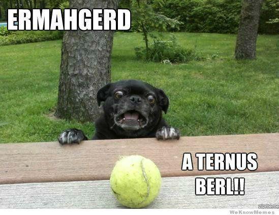 Image of: Animal Photobombs Dog Shocking Face Funny Animal Meme Image Askideascom 31 Very Funny Animal Meme Pictures And Images