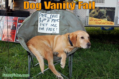 Dog Vanity Fail Funny Picture 20 most funniest animal fail pictures that make you laugh