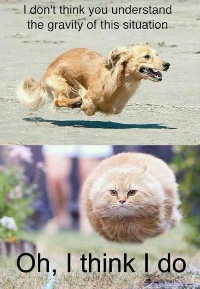 Funny Animal Dog And Cat Flying Meme Image 31 very funny animal meme pictures and images