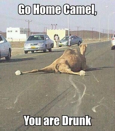 Image of: Funny Memes Go Home Camel You Are Drunk Funny Meme Image Askideascom 31 Very Funny Animal Meme Pictures And Images