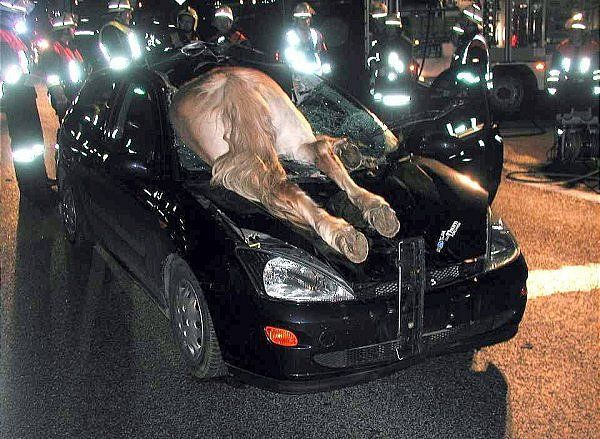 Horse Fallen On Car Funny Crash Picture For Whatsapp