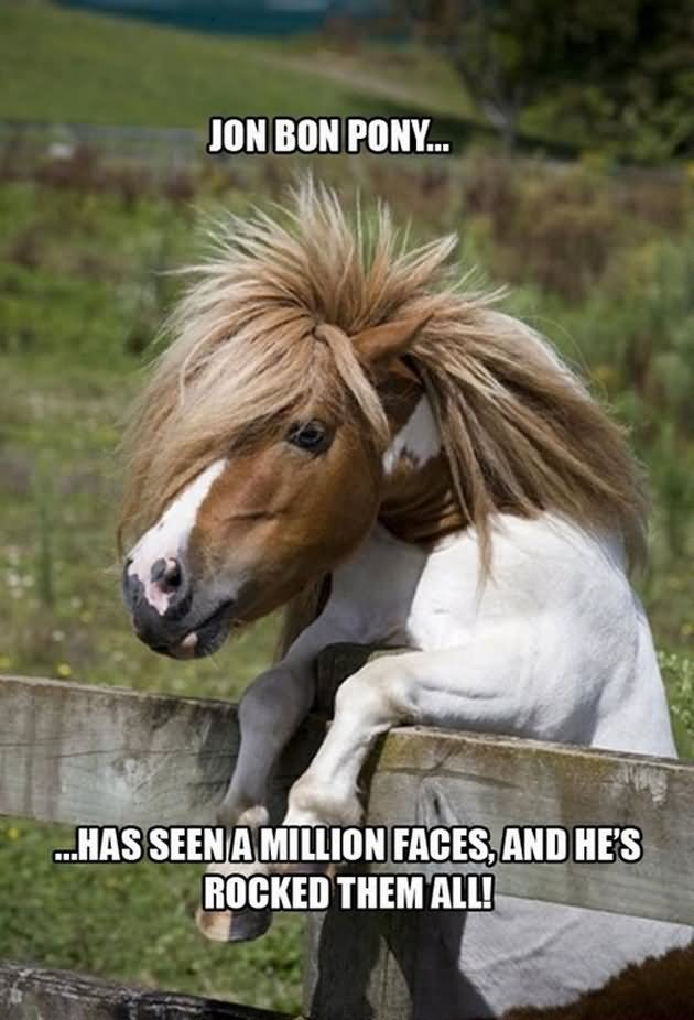 30 Best Horse Memes You Would Ever See In Your Life 99 Whiskers