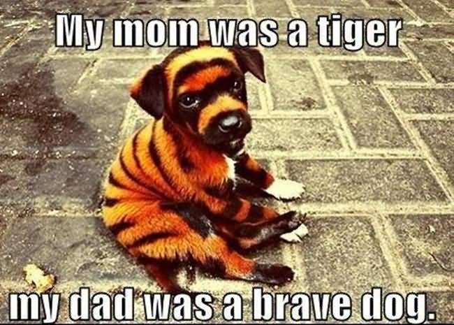 Funny Animal Meme - Askideas.com