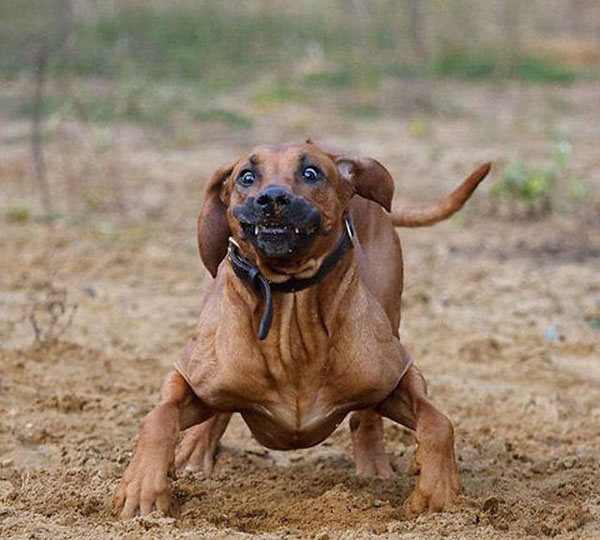 22+ Most Funny Animal Faces Pictures You Have Ever Seen  22+ Most Funny ...