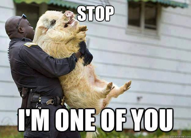Stop I Am one Of You Funny Animal Pig Meme Picture 20 most funniest animal meme pictures and images