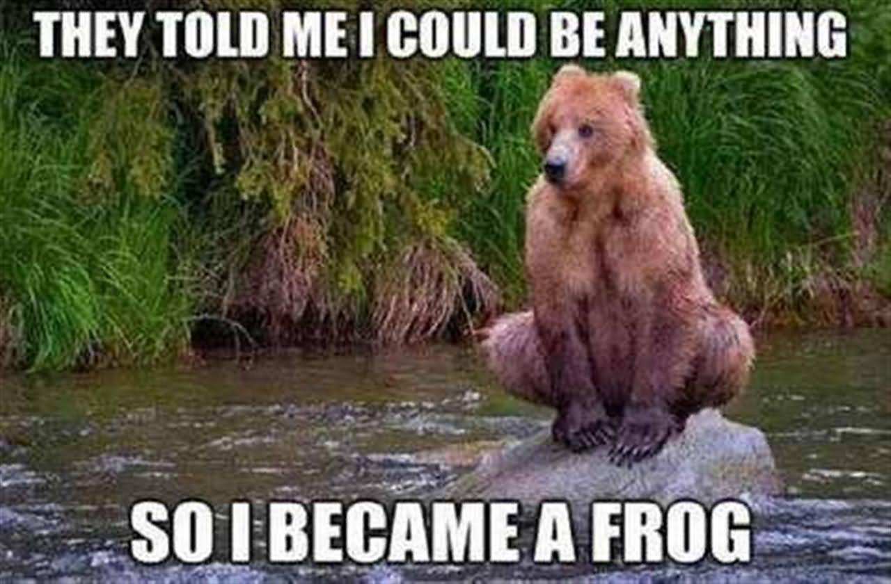 They Told Me I Could Be Anything Funny Bear Animal Meme Image 20 most funniest animal meme pictures and images