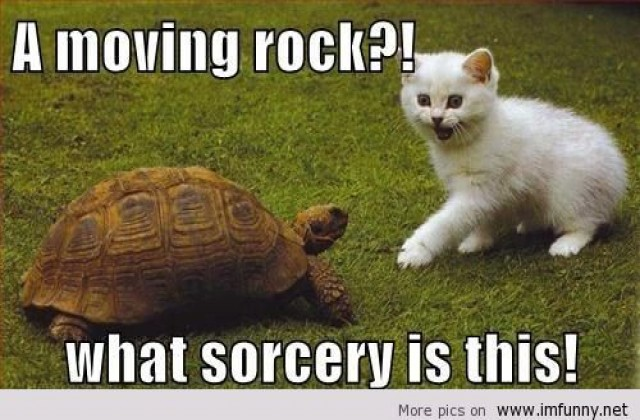 A Moving Rock What Sorcery Is This Funny Tortoise Meme Picture1 a moving rock what sorcery is this funny tortoise meme picture