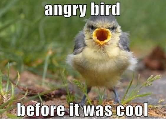 Angry Bird Before It Was Cool Funny Bird Meme Picture