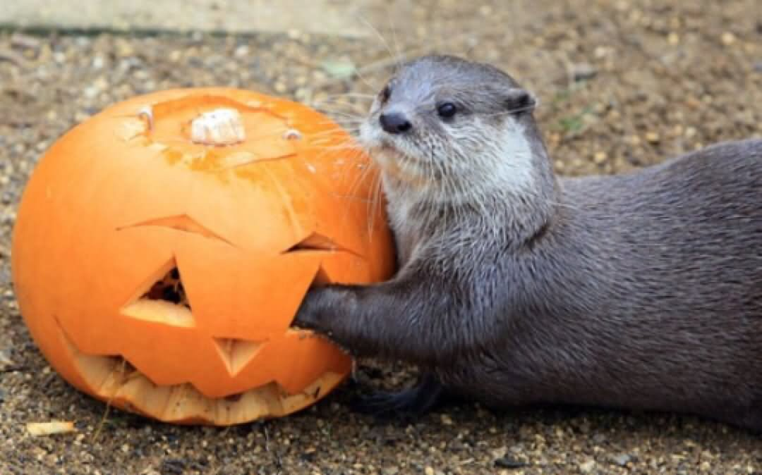Animal with halloween pumpkin funny picture