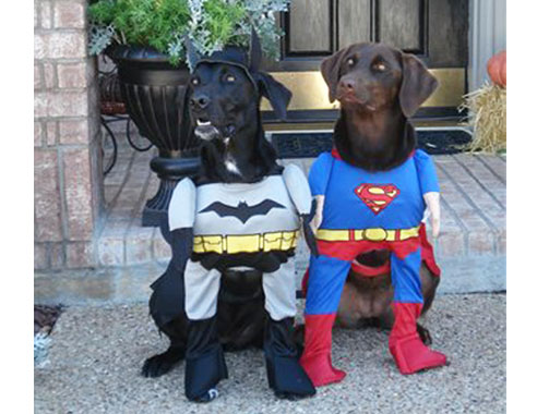 Batman And Spider Man Halloween Costumes For Dogs Funny Picture For Whatsapp & Batman And Spider Man Halloween Costumes For Dogs Funny Picture For ...