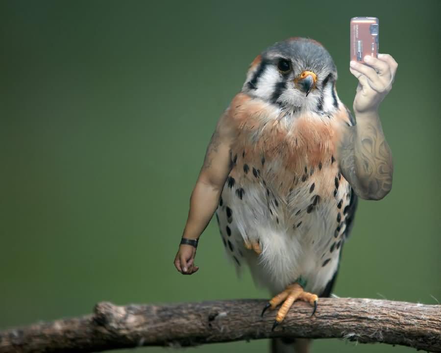 Bird Selfie Funny Bird Meme