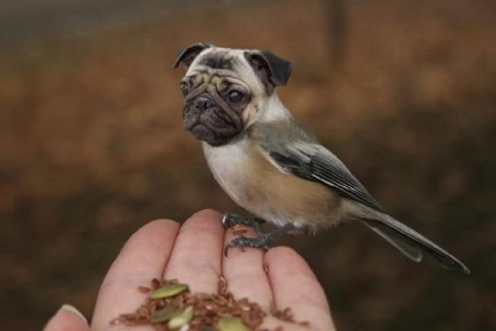 25 Very Funny Bird Face Pictures That Will Make You Laugh