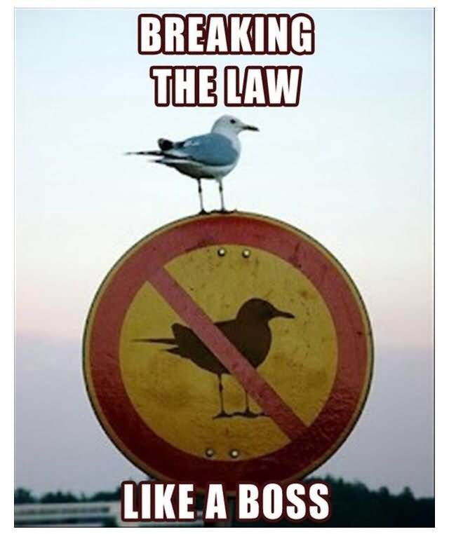 Breaking The Like A Boss Funny Bird Meme Image