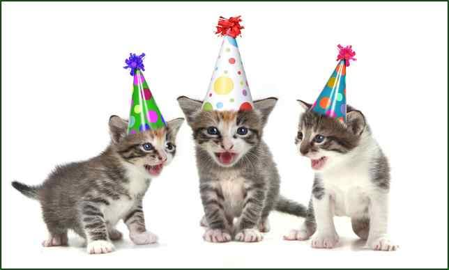 Cats With Birthday Hats Funny Picture