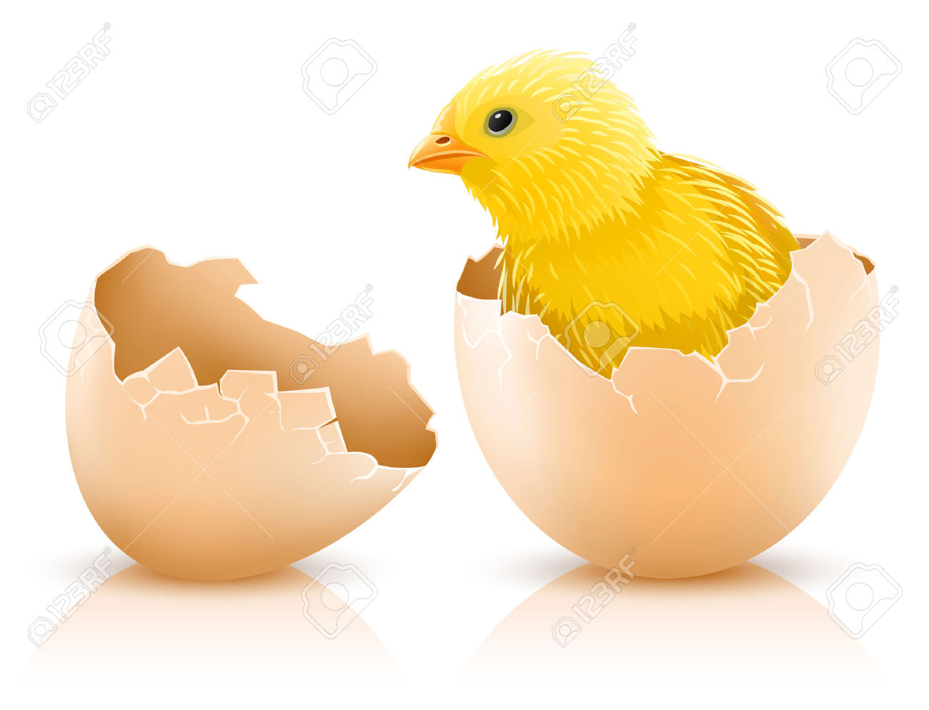 Baby Chicken Quotes: Chicken Leaving Cracked Egg Funny Clipart Image