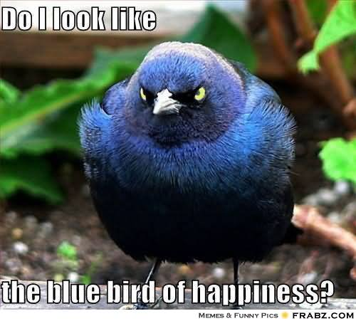 Do I Look Like The Blue Bird Of Happiness Funny Bird Meme Picture