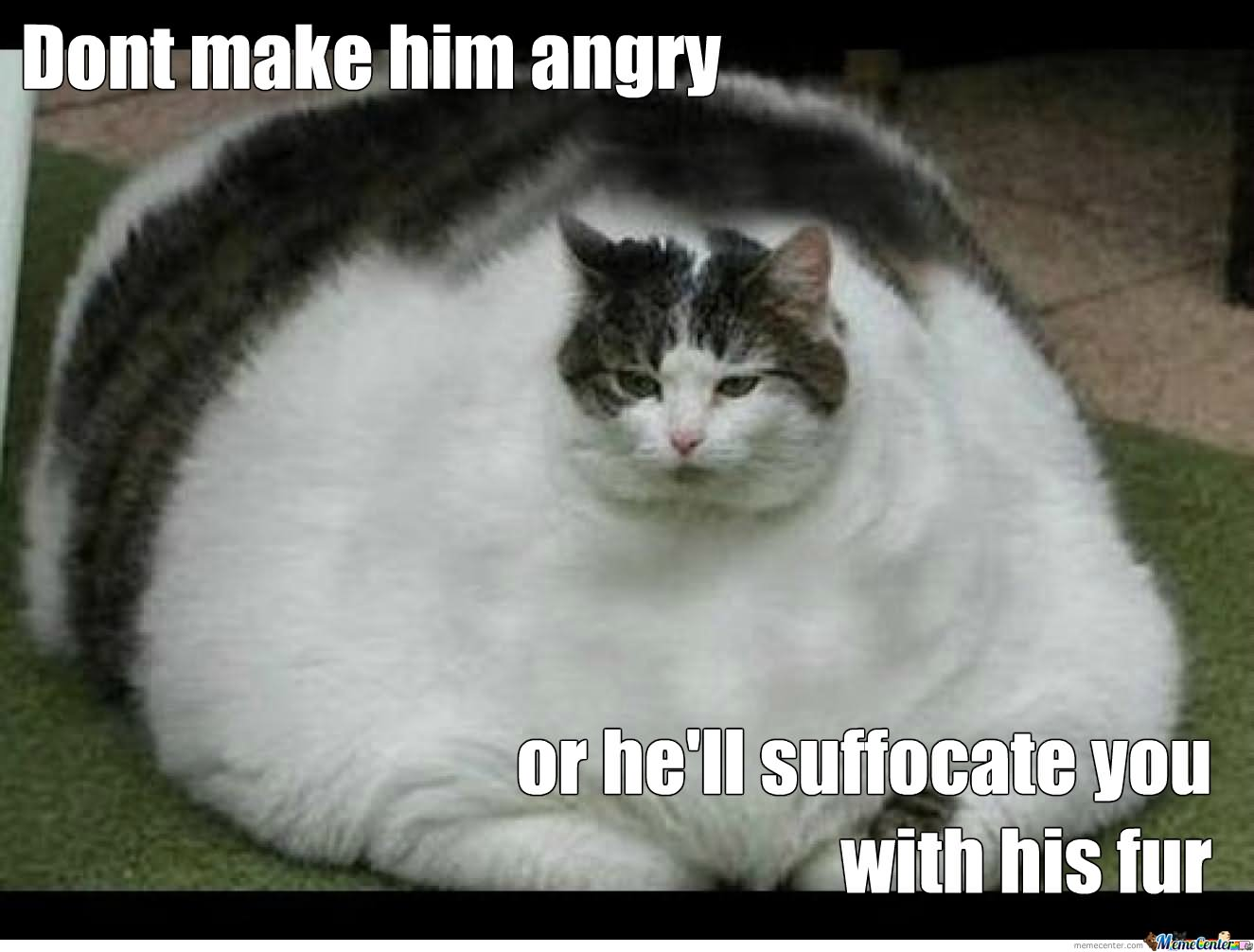 Don't Make Him Angry Funny Fat Cat Picture
