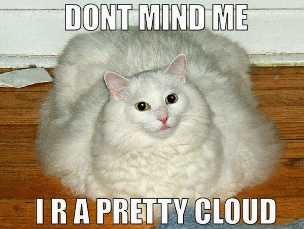 hilarious pictures of fat cats - photo #23