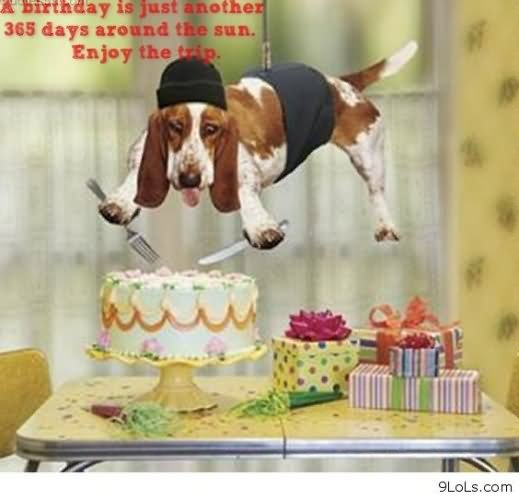 20 Very Funny Birthday Animal Pictures And Images