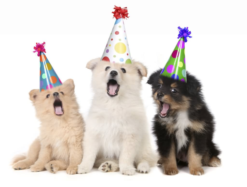 Funny Animal Puppies With Birthday Hats