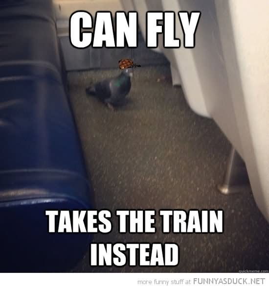 Funny Bird Meme Can I Fly Takes The Train Instead Image For Whatsapp