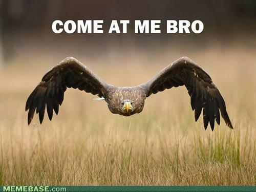 Funny Bird Meme Come At Me Bro