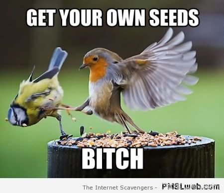 Funny Bird Meme Get Your Own Seeds Bitch Image
