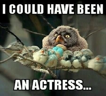 Funny Bird Meme I Could Have Been An Actress Image