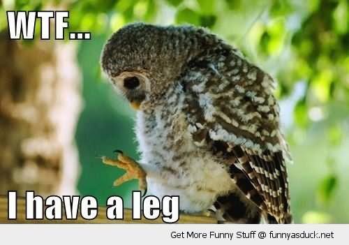 Funny Bird Meme Wtf I Have A Leg Funny Bird Meme Image