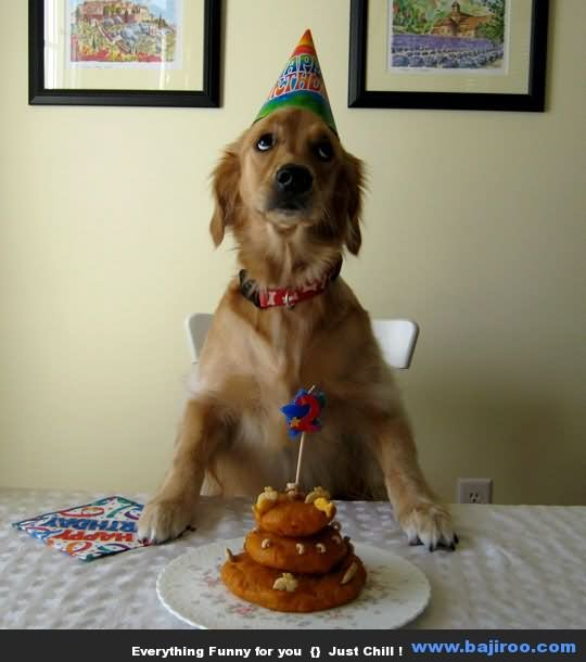 Funny Birthday Animal Dog Photo