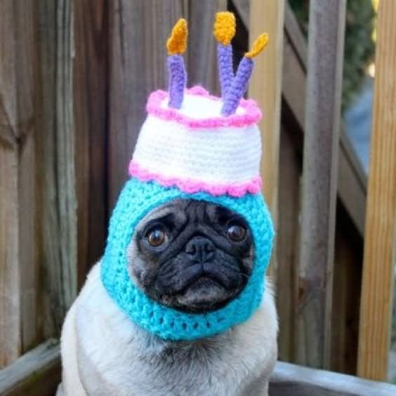 Pug With Birthday Cake Hat