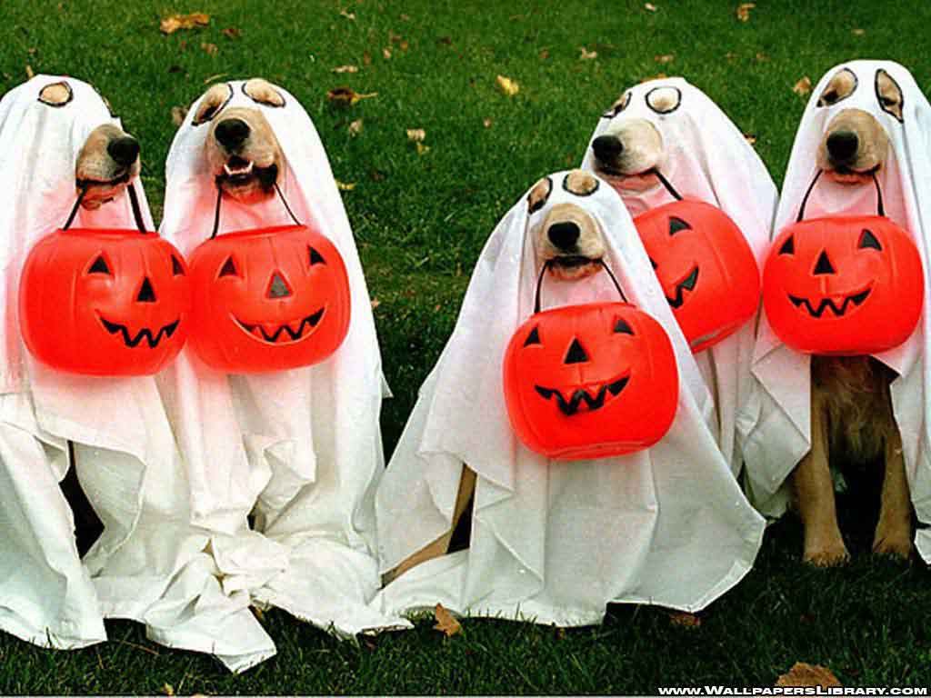 40+ Most Funny Halloween Animal Pictures And Images