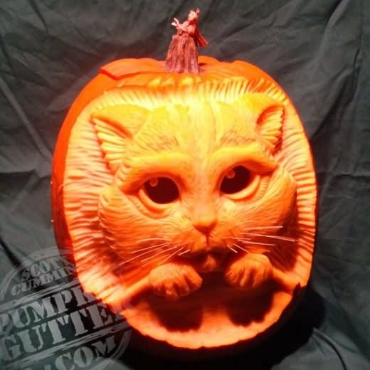 [Image: Funny-Halloween-Pumpkin-With-Cat-Face-Ph...atsapp.jpg]