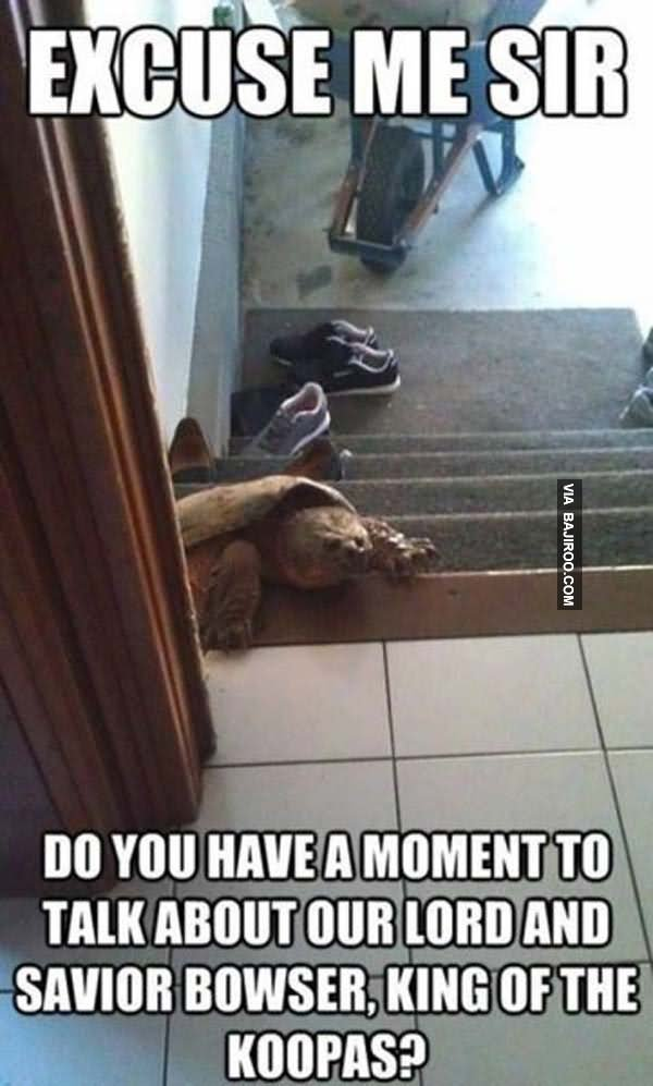 Funniest Meme You Have Ever Seen : Most funny tortoise meme pictures you have ever seen